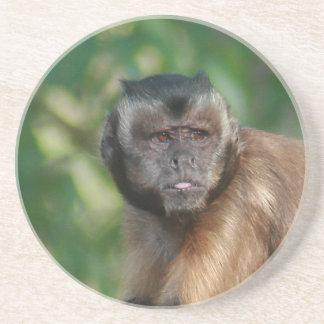 Capuchin Monkey Cute But Cranky Drink Coaster