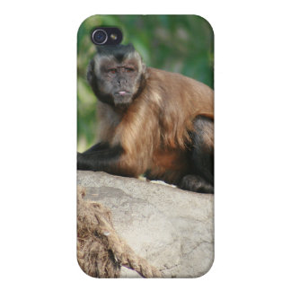 Capuchin Monkey Cute But Cranky iPhone 4 Cover