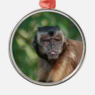 Capuchin Monkey Cute But Cranky Metal Ornament
