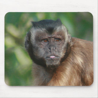 Capuchin Monkey Cute But Cranky Mouse Pad