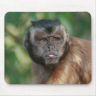 Capuchin Monkey Cute But Cranky Mouse Pad