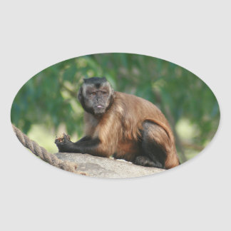 Capuchin Monkey Cute But Cranky Oval Sticker