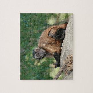 Capuchin Monkey Cute But Cranky Puzzles