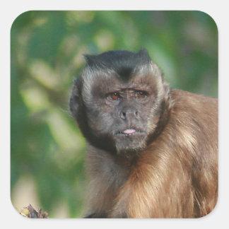 Capuchin Monkey Cute But Cranky Square Sticker