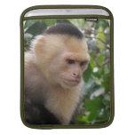 Capuchin Monkey iPad Sleeve