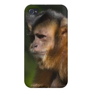 Capuchin Monkey iPhone 4 Cases