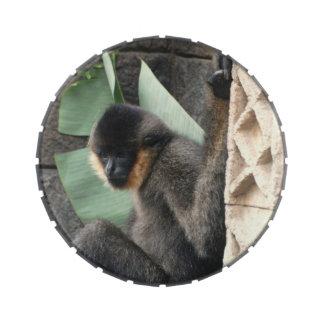 Capuchin Monkey Jelly Belly Tin