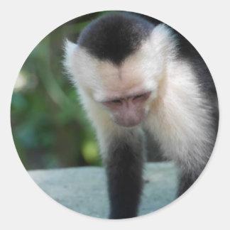 Capuchin Monkey.JPG Classic Round Sticker