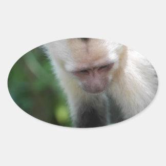 Capuchin Monkey.JPG Oval Sticker