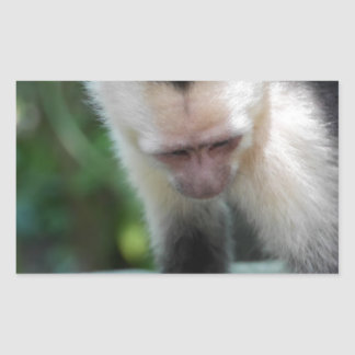 Capuchin Monkey.JPG Rectangular Sticker