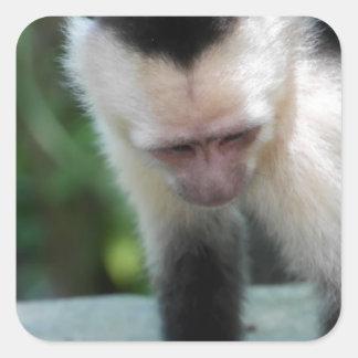 Capuchin Monkey.JPG Square Sticker