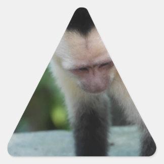 Capuchin Monkey.JPG Triangle Sticker