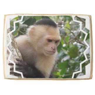 Capuchin Monkey Jumbo Cookie