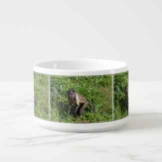 Capuchin Monkey Mugging for the Camera Chili Bowl
