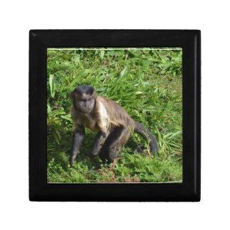 Capuchin Monkey Mugging for the Camera Keepsake Boxes