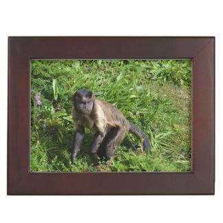 Capuchin Monkey Mugging for the Camera Keepsake Box