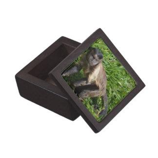 Capuchin Monkey Mugging for the Camera Premium Keepsake Boxes