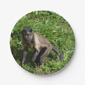 Capuchin Monkey Mugging for the Camera 7 Inch Paper Plate