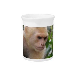 Capuchin Monkey Pitcher