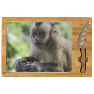 Capuchin Monkey Rectangular Cheese Board