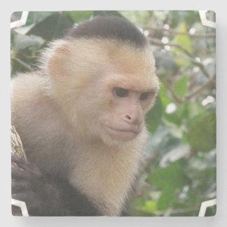 Capuchin Monkey Stone Beverage Coaster