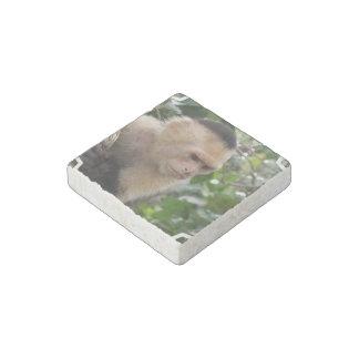 Capuchin Monkey Stone Magnet