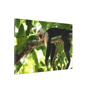 Capuchin Monkey Stretched Canvas Print