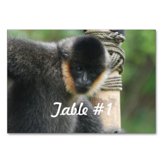 Capuchin Monkey Table Cards