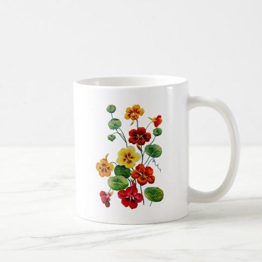 Capuchinas bordadas coloridas hermosas tazas de café