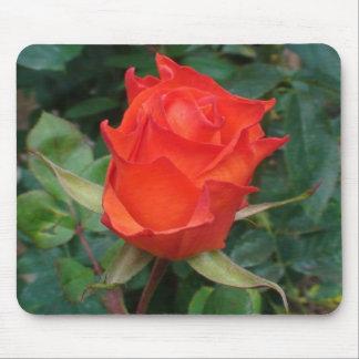 Capullo de rosa anaranjado de punta alfombrilla de ratones