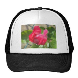 Capullo de rosa gorra
