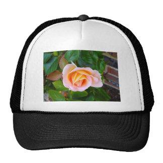 capullo de rosa gorras de camionero