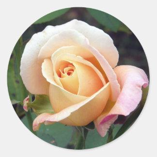 Capullo de rosa pálido del melocotón pegatina redonda