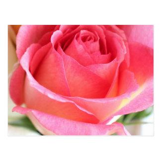 Capullo de rosa rosado 2 tarjeta postal