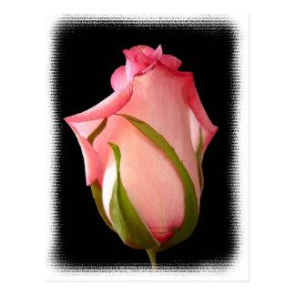 Capullo de rosa rosado con la frontera de lujo tarjeta postal