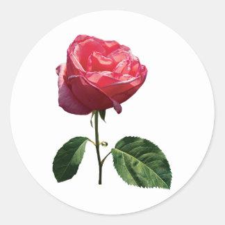 Capullo de rosa rosado delicado pegatina redonda