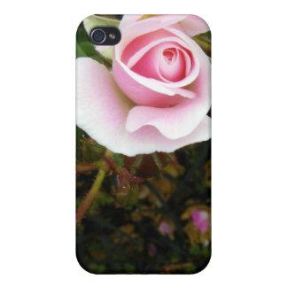 Capullo de rosa rosado iPhone 4 cárcasa