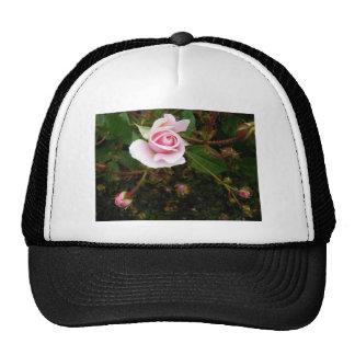Capullo de rosa rosado gorra