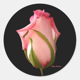 Capullo de rosa rosado pegatina redonda