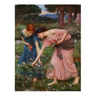 Capullos de rosa de YE del frunce de Juan W. Tarjetas Postales