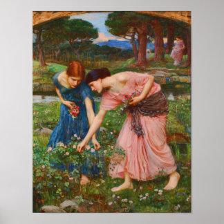 Capullos de rosa de YE del frunce mientras que YE  Poster