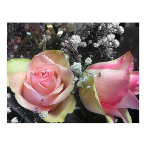 Capullos de rosa en monocromo tarjetas postales
