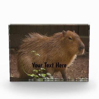 Capybara Acrylic Award