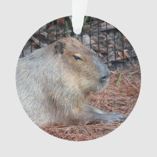 capybara animal side view wildlife critter image