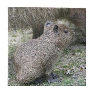 Capybara Babay Azulejo Cuadrado Pequeño