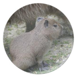 Capybara Babay Dinner Plates