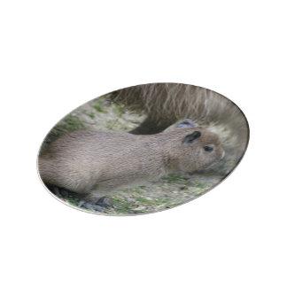 capybara baby porcelain plates