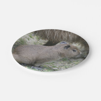 capybara baby 7 inch paper plate