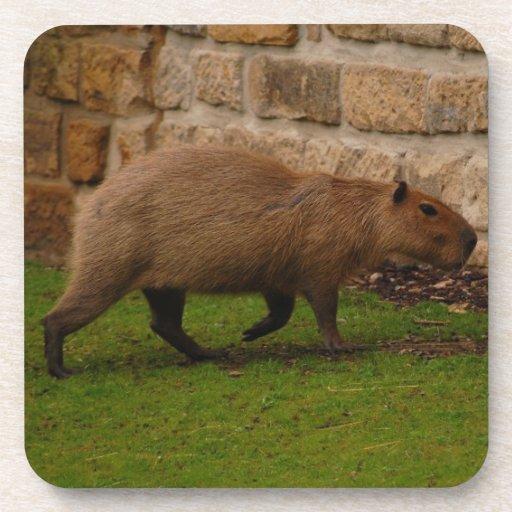 capybara beverage coaster