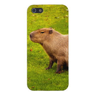 Capybara Case For iPhone SE/5/5s